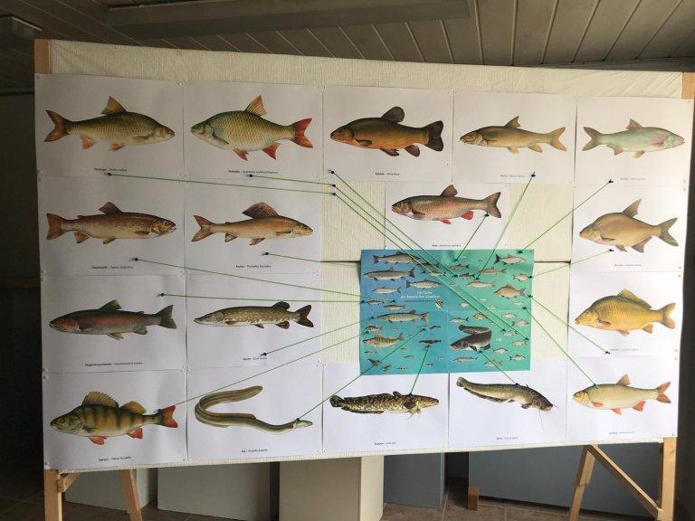 Fische Foto 2